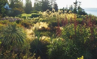 Windcliff, Seattle, Washington: two of the garden's key plants play a major role in this scene: red-flowered Lobelia tupa in the foreground and the pampas grass Cortaderia fulvida beyond it. Spiky Yucca rostrata contrasts with soft stipa behind.