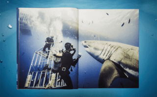 Michael Muller. Sharks. Face-to-Face with the Ocean's Endangered Predator