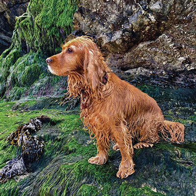 Tim Gosling's spaniel – a dog makes a home, he believes
