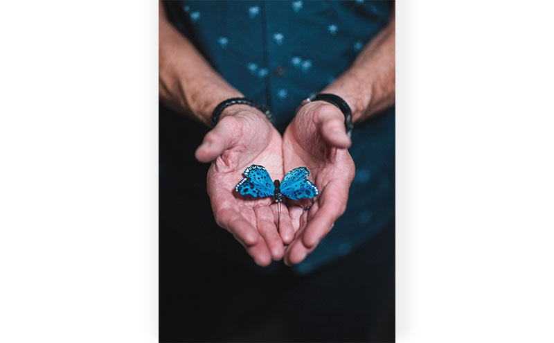 artificial-butterfly-in-hands