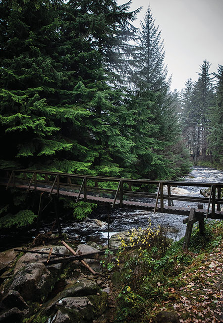 woodland-at-Glen-Dye
