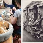 cat-sleeping-in-crail-pottery