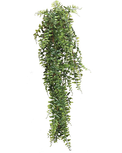 audenza-trailing-plant