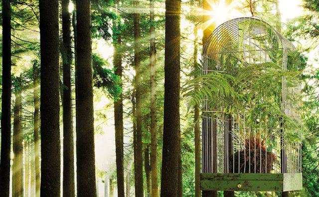 Photowall_Sunbeaxm_Through_Trees.jpg