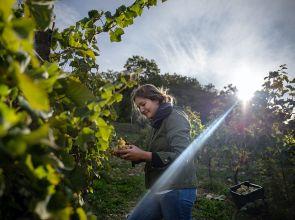 Sofia Di Ciacca Tana, I Ciacca vineyard, winery, farm and boutique hotel